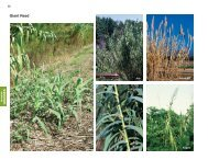 Giant Reed - Invasive.org