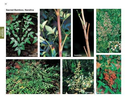 Sacred Bamboo, Nandina - Invasive.org