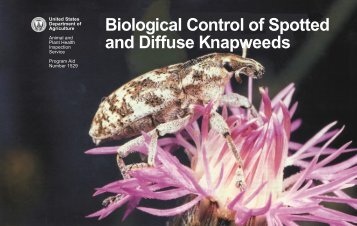 Biological Control of Spotted and Diffuse Knapweeds - Invasive.org
