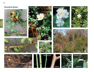 Nonnative Roses