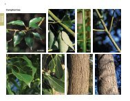 Camphortree - Invasive.org