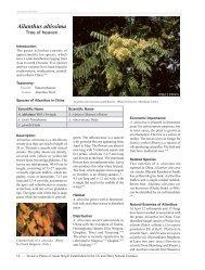 Ailanthus altissima - Invasive.org