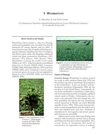 5 WATERLETTUCE PEST STATUS OF WEED ... - Invasive Plants