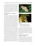 5 WATERLETTUCE PEST STATUS OF WEED ... - Invasive Plants - Page 7