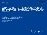 What affects the production of true seeds in perennial ryegrass?