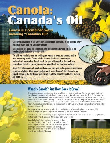 What is Canola? And How Does it Grow?