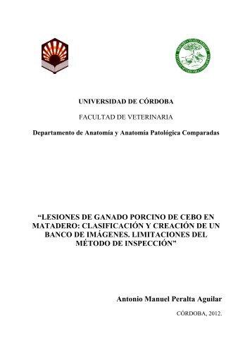 lesiones de ganado porcino de cebo en matadero: clasificación y ...