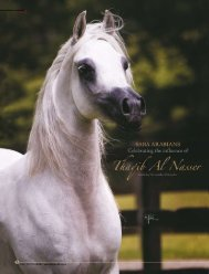 Thaqib Al Nasser - tutto arabi