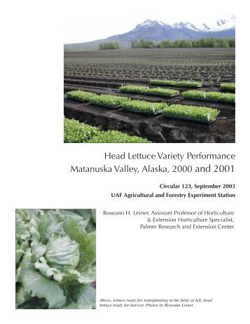 Head Lettuce Variety Performance Matanuska Valley, Alaska, 2000 ...