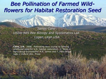 Bee Pollination of Farmed Wild- flowers for Habitat Restoration Seed