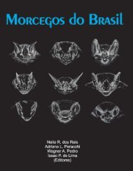 Morcegos do Brasil - Universidade Estadual de Londrina