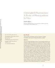 Chlorophyll Fluorescence: A Probe of Photosynthesis In Vivo