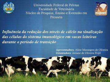 Apresentadora - Universidade Federal de Pelotas