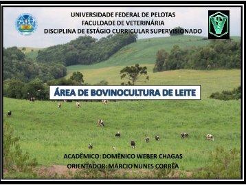 Anexo 2 - Universidade Federal de Pelotas