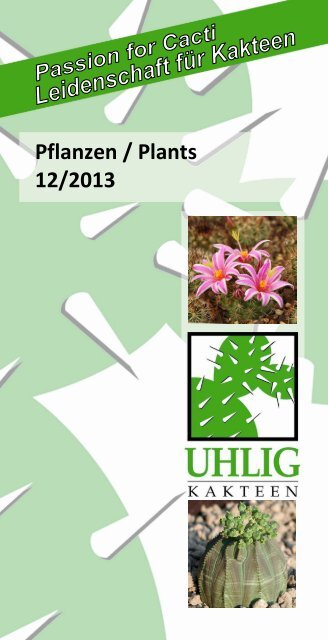 synonyme 10 graines Mesembryanthemum lesliei Lithops lesliei