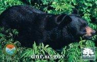 Bear Poster - State of South Carolina