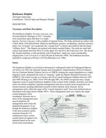 Bottlenose Dolphin Tursiops truncatus - South Carolina Department ...