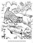 Wildlife Management Activity Book - South Carolina Department of ... - Page 3