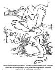 Wildlife Management Activity Book - South Carolina Department of ... - Page 4
