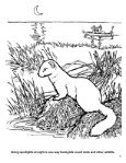 Wildlife Management Activity Book - South Carolina Department of ... - Page 7