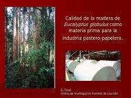 Calidad da la madera da Eucalyptus globulus como mataría prima ...