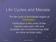 Life Cycles and Meiosis