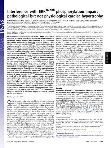 Interference with ERK phosphorylation impairs pathological but not ...