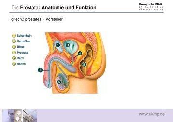 Gutartige Prostataerkrankungen - Urologische Klinik Dr. Castringius ...