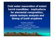 Cold water maceration of extant Cold water maceration of extant ...