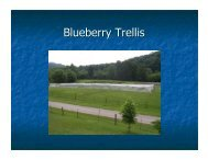 Blueberry Trellis