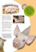 Maatilan eläimet.pdf - MTK - Page 7