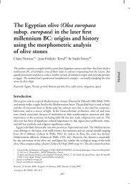 The Egyptian olive (Olea europaea subsp ... - ResearchGate