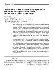 Wood anatomy of West European Betula - UMR 5059 - Université ...