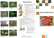 Grössere Wildsträucher (PDF 450 KB) - bei der Umweltfachstelle Olten
