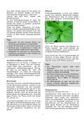 Vitamine aus Wildpflanzen und Keimlingen - Umweltprofis - Page 2