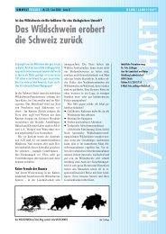 Wildschwein 21-24 - Kanton Zürich
