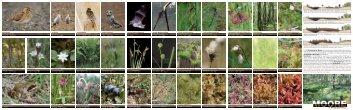 Faltblatt Moore (PDF| 1,1 MB) - Stiftung Natur und Umwelt ...