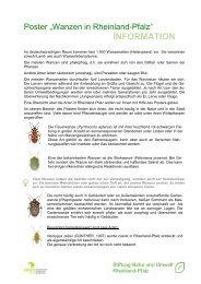 Begleittext Wanzenposter - Stiftung Natur und Umwelt Rheinland-Pfalz