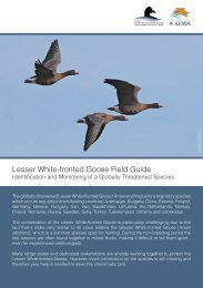 Lesser White-fronted Goose Field Guide - WWF