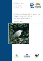 Madagascar Pond-heron - Convention on Migratory Species