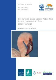 Lesser Flamingo Conservation Action Plan - Convention on ...