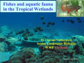Fish and Aquatic Fauna of South China Sea Wetlands (Dr. Chavalit ...