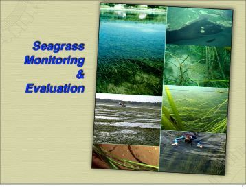 Seagrass Monitoring & Evaluation