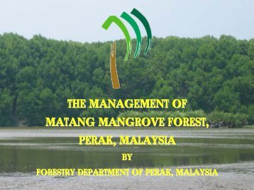 Management of the Matang Mangrove Forest