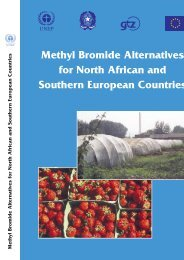 Methyl Bromide Alternatives for North African and Southern ... - DTIE