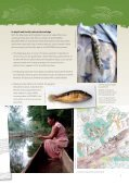 Fish and Turtles - Unesco - Page 5