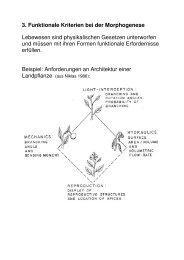 Funktionale Kriterien bei der Morphogenese (PDF)