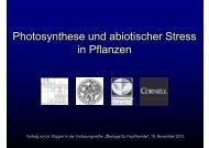Ph t th d bi ti h St Photosynthese und abiotischer Stress in Pflanzen ...