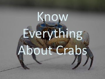 Know Everything About Crabs