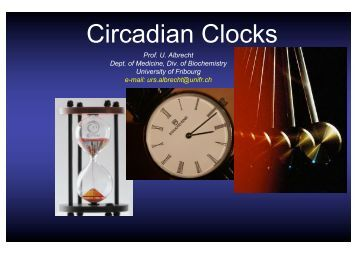 Circadian Clocks